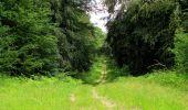 Randonnée Marche SAINT-JEAN-AUX-BOIS - en forêt de Compiègne_2_ruines gallo-romaines de Champlieu_les Petits Monts - Photo 124