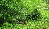 Randonnée Marche SAINT-JEAN-AUX-BOIS - en forêt de Compiègne_2_ruines gallo-romaines de Champlieu_les Petits Monts - Photo 243