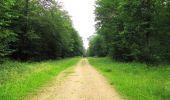 Randonnée Marche SAINT-JEAN-AUX-BOIS - en forêt de Compiègne_2_ruines gallo-romaines de Champlieu_les Petits Monts - Photo 194