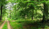 Randonnée Marche SAINT-JEAN-AUX-BOIS - en forêt de Compiègne_2_ruines gallo-romaines de Champlieu_les Petits Monts - Photo 146