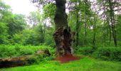 Randonnée Marche SAINT-JEAN-AUX-BOIS - en forêt de Compiègne_2_ruines gallo-romaines de Champlieu_les Petits Monts - Photo 263