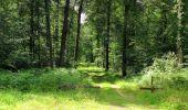 Randonnée Marche SAINT-JEAN-AUX-BOIS - en forêt de Compiègne_2_ruines gallo-romaines de Champlieu_les Petits Monts - Photo 155