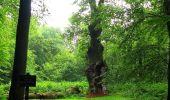 Randonnée Marche SAINT-JEAN-AUX-BOIS - en forêt de Compiègne_2_ruines gallo-romaines de Champlieu_les Petits Monts - Photo 261