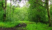 Randonnée Marche SAINT-JEAN-AUX-BOIS - en forêt de Compiègne_2_ruines gallo-romaines de Champlieu_les Petits Monts - Photo 232