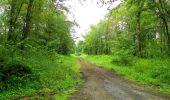 Randonnée Marche SAINT-JEAN-AUX-BOIS - en forêt de Compiègne_2_ruines gallo-romaines de Champlieu_les Petits Monts - Photo 245