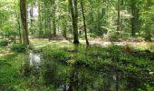 Randonnée Marche SAINT-JEAN-AUX-BOIS - en forêt de Compiègne_2_ruines gallo-romaines de Champlieu_les Petits Monts - Photo 160