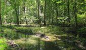 Randonnée Marche SAINT-JEAN-AUX-BOIS - en forêt de Compiègne_2_ruines gallo-romaines de Champlieu_les Petits Monts - Photo 161