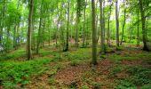 Randonnée Marche SAINT-JEAN-AUX-BOIS - en forêt de Compiègne_2_ruines gallo-romaines de Champlieu_les Petits Monts - Photo 120
