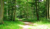 Randonnée Marche SAINT-JEAN-AUX-BOIS - en forêt de Compiègne_2_ruines gallo-romaines de Champlieu_les Petits Monts - Photo 98