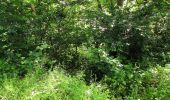 Randonnée Marche SAINT-JEAN-AUX-BOIS - en forêt de Compiègne_2_ruines gallo-romaines de Champlieu_les Petits Monts - Photo 191