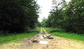 Randonnée Marche SAINT-JEAN-AUX-BOIS - en forêt de Compiègne_2_ruines gallo-romaines de Champlieu_les Petits Monts - Photo 163