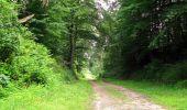 Randonnée Marche SAINT-JEAN-AUX-BOIS - en forêt de Compiègne_2_ruines gallo-romaines de Champlieu_les Petits Monts - Photo 138