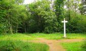 Randonnée Marche SAINT-JEAN-AUX-BOIS - en forêt de Compiègne_2_ruines gallo-romaines de Champlieu_les Petits Monts - Photo 217