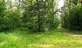 Randonnée Marche SAINT-JEAN-AUX-BOIS - en forêt de Compiègne_2_ruines gallo-romaines de Champlieu_les Petits Monts - Photo 220
