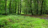 Randonnée Marche SAINT-JEAN-AUX-BOIS - en forêt de Compiègne_2_ruines gallo-romaines de Champlieu_les Petits Monts - Photo 101
