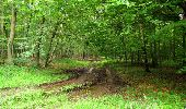 Randonnée Marche SAINT-JEAN-AUX-BOIS - en forêt de Compiègne_2_ruines gallo-romaines de Champlieu_les Petits Monts - Photo 33