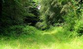 Randonnée Marche SAINT-JEAN-AUX-BOIS - en forêt de Compiègne_2_ruines gallo-romaines de Champlieu_les Petits Monts - Photo 125