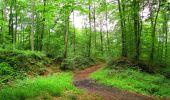 Randonnée Marche SAINT-JEAN-AUX-BOIS - en forêt de Compiègne_2_ruines gallo-romaines de Champlieu_les Petits Monts - Photo 23