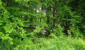 Randonnée Marche SAINT-JEAN-AUX-BOIS - en forêt de Compiègne_2_ruines gallo-romaines de Champlieu_les Petits Monts - Photo 208