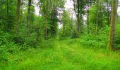 Trail Walk SAINT-JEAN-AUX-BOIS - en forêt de Compiègne_33_12_2019_les Tournantes de l'étang Saint-Jean et des Prés Saint-Jean - Photo 187