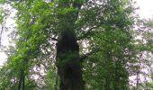 Randonnée Marche SAINT-JEAN-AUX-BOIS - en forêt de Compiègne_2_ruines gallo-romaines de Champlieu_les Petits Monts - Photo 264