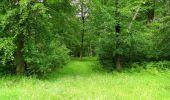 Randonnée Marche SAINT-JEAN-AUX-BOIS - en forêt de Compiègne_2_ruines gallo-romaines de Champlieu_les Petits Monts - Photo 58