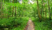 Randonnée Marche SAINT-JEAN-AUX-BOIS - en forêt de Compiègne_2_ruines gallo-romaines de Champlieu_les Petits Monts - Photo 117