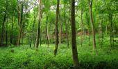 Randonnée Marche SAINT-JEAN-AUX-BOIS - en forêt de Compiègne_2_ruines gallo-romaines de Champlieu_les Petits Monts - Photo 119