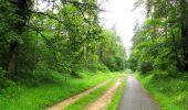 Randonnée Marche SAINT-JEAN-AUX-BOIS - en forêt de Compiègne_2_ruines gallo-romaines de Champlieu_les Petits Monts - Photo 247