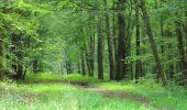 Randonnée Marche SAINT-JEAN-AUX-BOIS - en forêt de Compiègne_2_ruines gallo-romaines de Champlieu_les Petits Monts - Photo 139