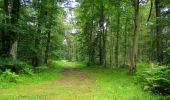 Randonnée Marche SAINT-JEAN-AUX-BOIS - en forêt de Compiègne_2_ruines gallo-romaines de Champlieu_les Petits Monts - Photo 145