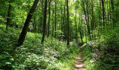 Randonnée Marche SAINT-JEAN-AUX-BOIS - en forêt de Compiègne_2_ruines gallo-romaines de Champlieu_les Petits Monts - Photo 123