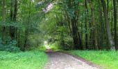 Randonnée Marche SAINT-JEAN-AUX-BOIS - en forêt de Compiègne_2_ruines gallo-romaines de Champlieu_les Petits Monts - Photo 140
