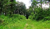 Randonnée Marche SAINT-JEAN-AUX-BOIS - en forêt de Compiègne_2_ruines gallo-romaines de Champlieu_les Petits Monts - Photo 141
