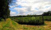 Randonnée Marche SAINT-JEAN-AUX-BOIS - en forêt de Compiègne_2_ruines gallo-romaines de Champlieu_les Petits Monts - Photo 94