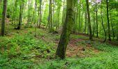 Randonnée Marche SAINT-JEAN-AUX-BOIS - en forêt de Compiègne_2_ruines gallo-romaines de Champlieu_les Petits Monts - Photo 118