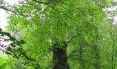 Randonnée Marche SAINT-JEAN-AUX-BOIS - en forêt de Compiègne_2_ruines gallo-romaines de Champlieu_les Petits Monts - Photo 267