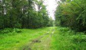 Randonnée Marche SAINT-JEAN-AUX-BOIS - en forêt de Compiègne_2_ruines gallo-romaines de Champlieu_les Petits Monts - Photo 255