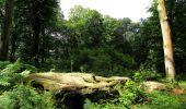 Randonnée Marche SAINT-JEAN-AUX-BOIS - en forêt de Compiègne_2_ruines gallo-romaines de Champlieu_les Petits Monts - Photo 149