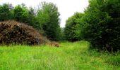 Randonnée Marche SAINT-JEAN-AUX-BOIS - en forêt de Compiègne_2_ruines gallo-romaines de Champlieu_les Petits Monts - Photo 57