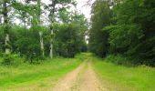 Randonnée Marche SAINT-JEAN-AUX-BOIS - en forêt de Compiègne_2_ruines gallo-romaines de Champlieu_les Petits Monts - Photo 197