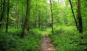 Randonnée Marche SAINT-JEAN-AUX-BOIS - en forêt de Compiègne_2_ruines gallo-romaines de Champlieu_les Petits Monts - Photo 116