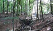 Randonnée Marche Spa - Balade entre fagnes et Forêts - Domaine de Bérinzenne - Photo 5