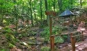 Randonnée Marche Spa - Balade entre fagnes et Forêts - Domaine de Bérinzenne - Photo 4