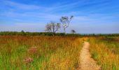 Randonnée Marche Spa - Balade entre fagnes et Forêts - Domaine de Bérinzenne - Photo 1