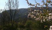 Trail Walk PRATS-DE-MOLLO-LA-PRESTE -  - Photo 3