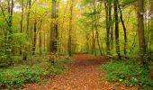 Randonnée Marche LONGPONT - en forêt de Retz_49_Longpont_ étangs de Javage_AR - Photo 36