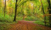 Randonnée Marche LONGPONT - en forêt de Retz_49_Longpont_ étangs de Javage_AR - Photo 38