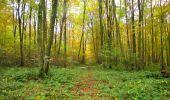 Randonnée Marche LONGPONT - en forêt de Retz_49_Longpont_ étangs de Javage_AR - Photo 121
