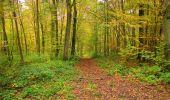 Randonnée Marche LONGPONT - en forêt de Retz_49_Longpont_ étangs de Javage_AR - Photo 35